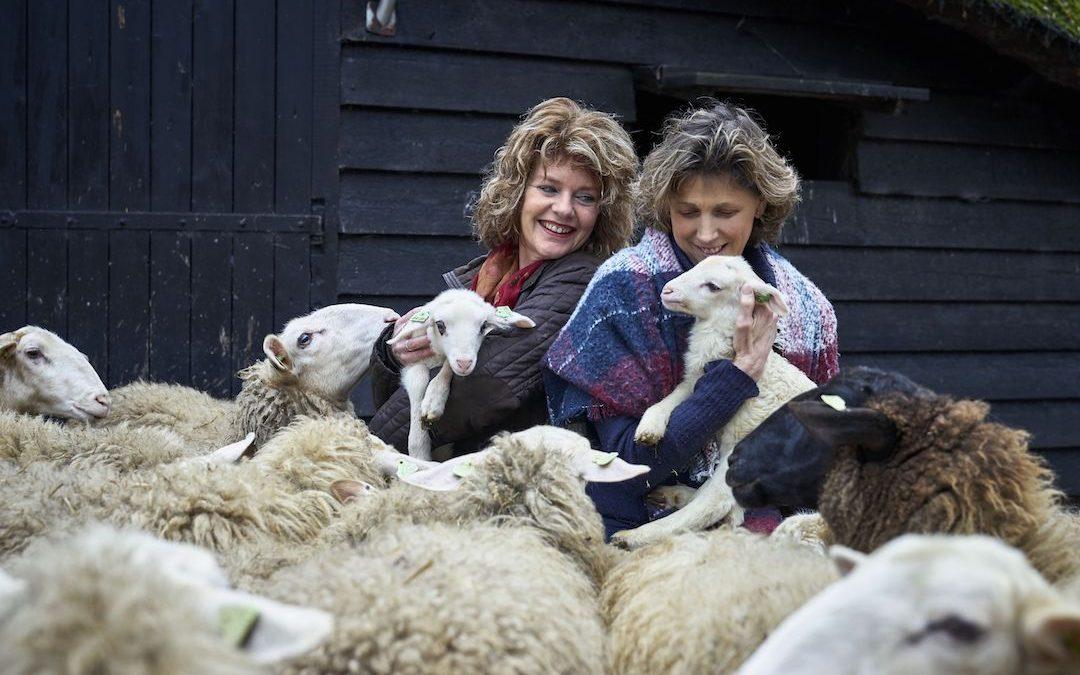 Sponsoring: Lammetjes aaien bij Schaapskooi